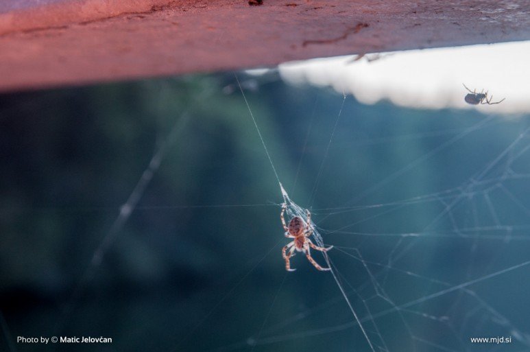 20150424  DSC8720 773x513 - Zbilje and some spiders