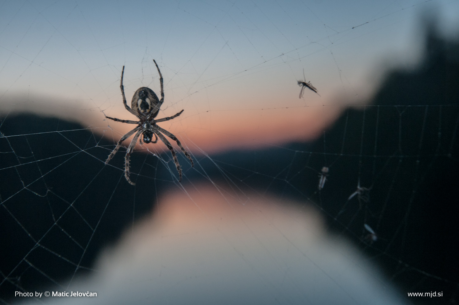 Zbilje and some spiders 15
