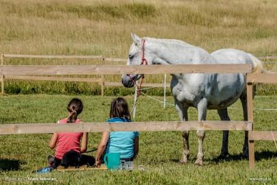 20150703 DSC00999 2 405x270 - HorseCamp 2015 — 1. teden