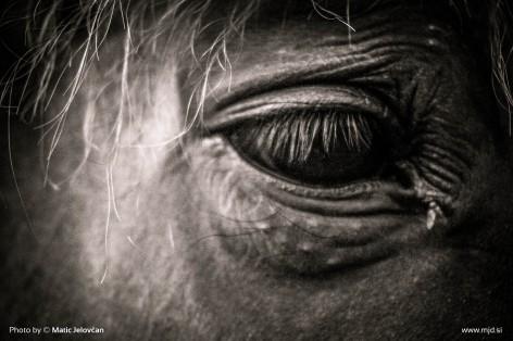 20150703 DSC01088 472x314 - HorseCamp 2015 — 1. teden