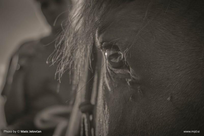 20150703 DSC01099 801x534 - HorseCamp 2015 — 1. teden