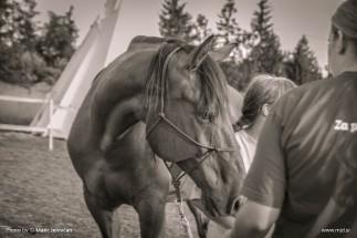 20150712  DSC0214 323x215 - HorseCamp 2015 — 3. teden