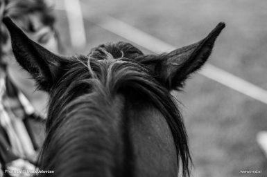 20150720 DSC03858 385x256 - HorseCamp 2015 — 4. teden