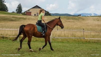 20150818 C0005T01 405x228 - HorseCamp 2015 — 6. teden