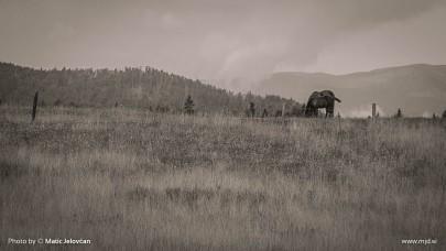 20150818 C0006T01 405x228 - HorseCamp 2015 — 6. teden