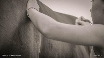 20150820 C0002T01 428x241 - HorseCamp 2015 — 6. teden