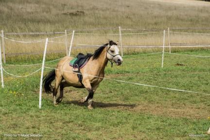 20150820 DSC07261 432x288 - HorseCamp 2015 — 6. teden