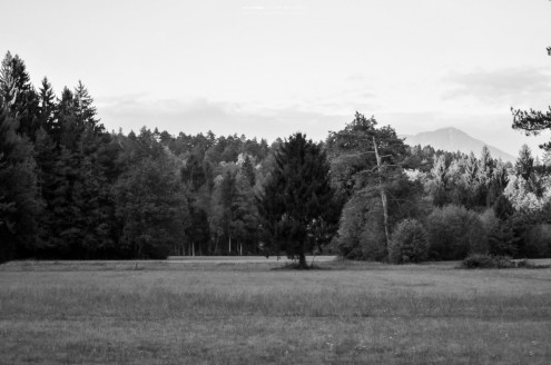 DSC14511 495x328 - In the Woods