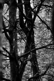 DSC14531 218x328 - In the Woods