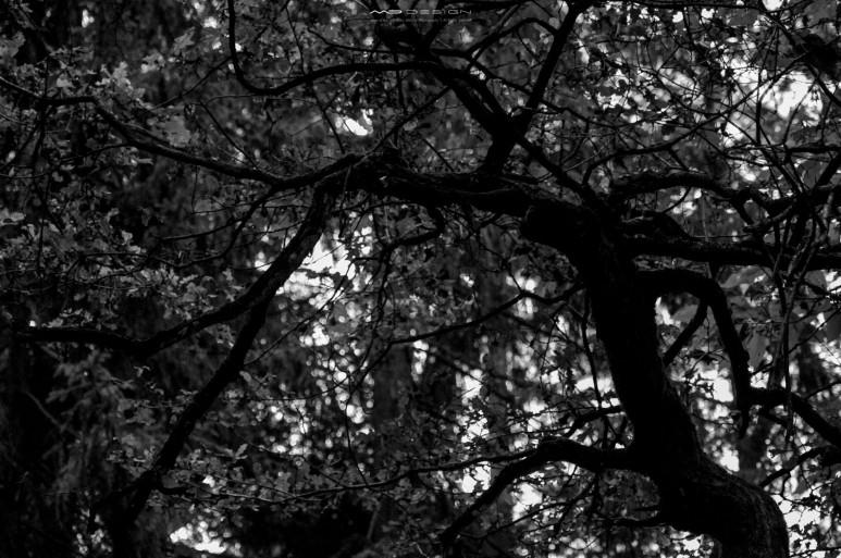 DSC14611 773x513 - In the Woods