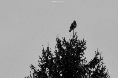 DSC14721 384x255 - In the Woods