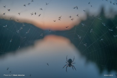 20150424  DSC8704 385x256 - Zbilje and some spiders