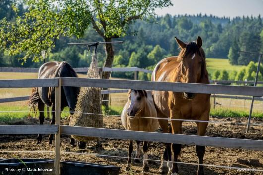 20150710 DSC01968 530x353 - HorseCamp 2015 — 2. teden