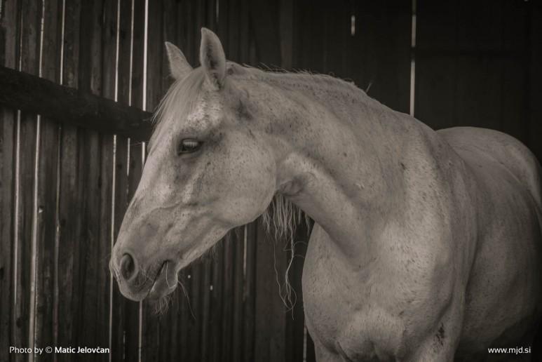 20150713 DSC02589 773x516 - HorseCamp 2015 — 3. teden
