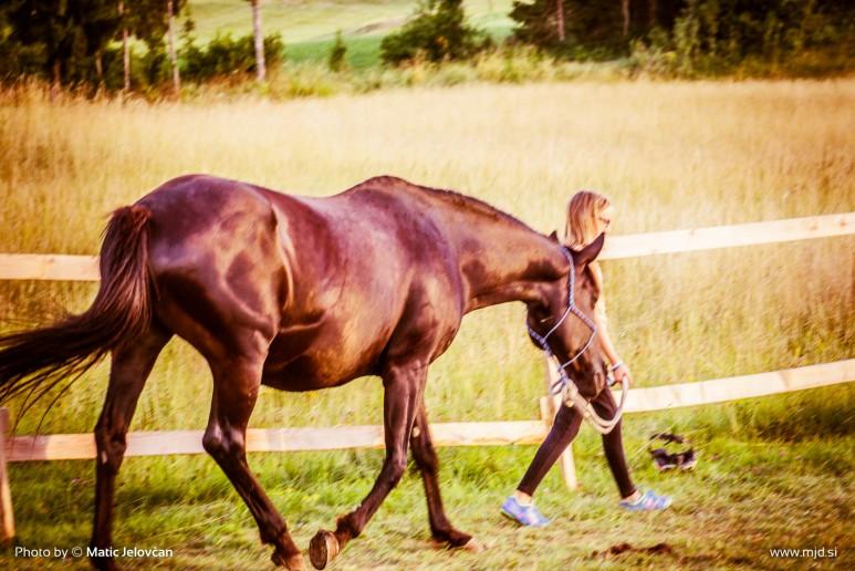 20150720 DSC03771 773x516 - HorseCamp 2015 — 4. teden