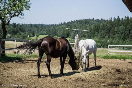 20150810 DSC05537 433x288 - HorseCamp 2015 — 5. teden