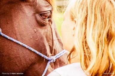 20150818 DSC06629 384x256 - HorseCamp 2015 — 6. teden