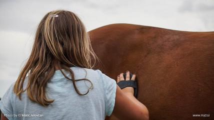 20150820 C0003T01 428x241 - HorseCamp 2015 — 6. teden