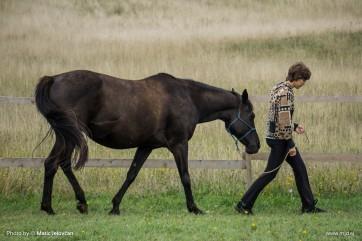 20150821 DSC07540 362x241 - HorseCamp 2015 — 6. teden