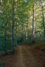 2021 06 25 20.12.08 DizMensR web 153x229 - Men's retreat in the wilderness with DiŽ