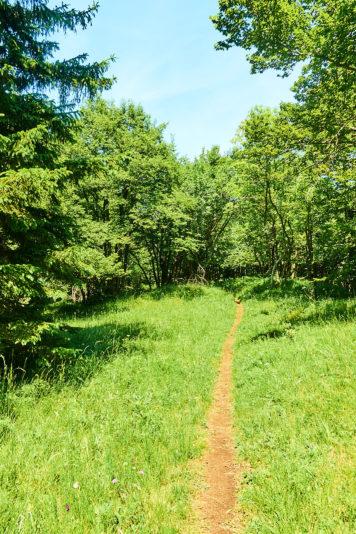 2021 06 28 12.48.38 DizMensR web 356x534 - Men's retreat in the wilderness with DiŽ