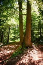 2021 06 28 12.57.36 DizMensR web 153x229 - Men's retreat in the wilderness with DiŽ